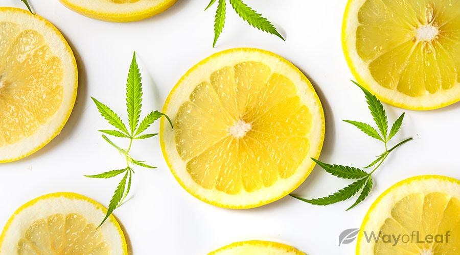 cannabis-infused-gravy