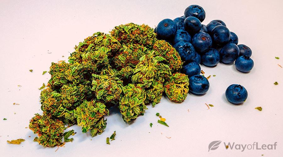 blueberry-diesel-cannabis-strain