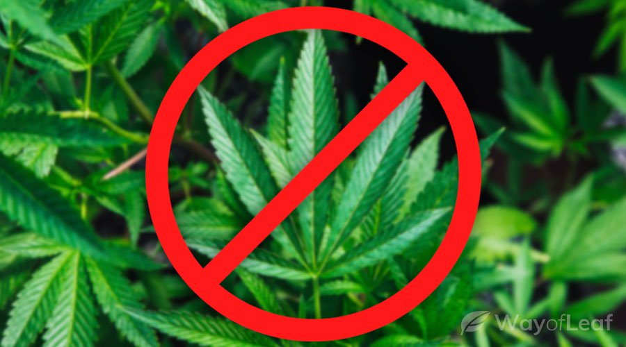 why-was-hemp-banned