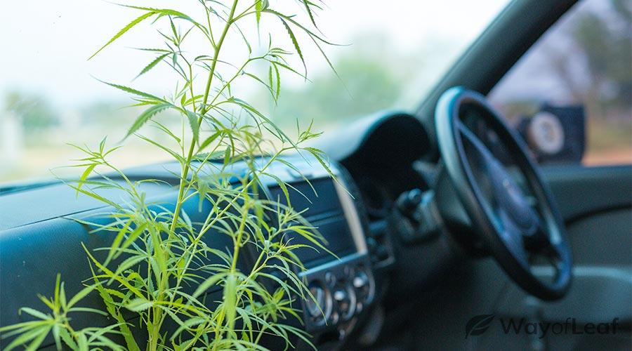 did-henry-ford-really-create-a-hemp-car?