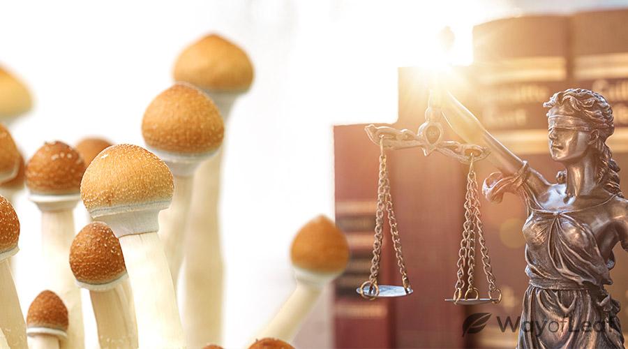 where-can-one-legally-take-magic-mushrooms-north-america