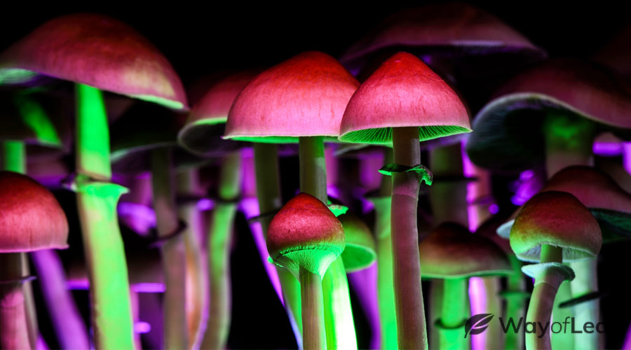 how to have a good psychedelic trip substance