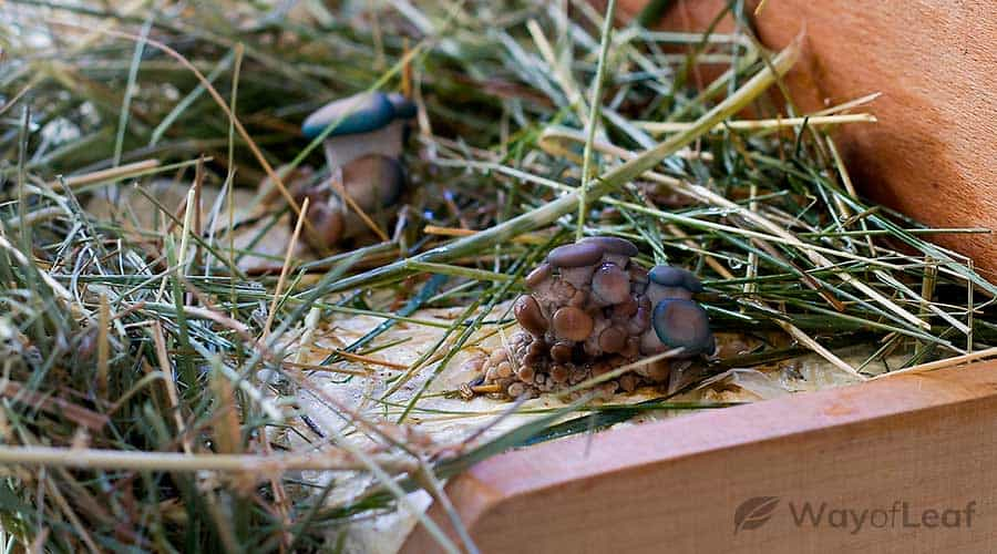 the-benefits-of-growing-mushrooms-on-coffee-waste