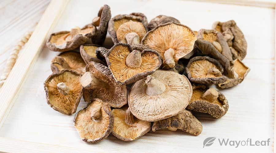 what's-so-good-about-shiitake-mushrooms