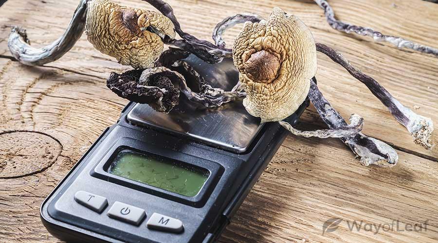 how-do-mushrooms-help-anxiety