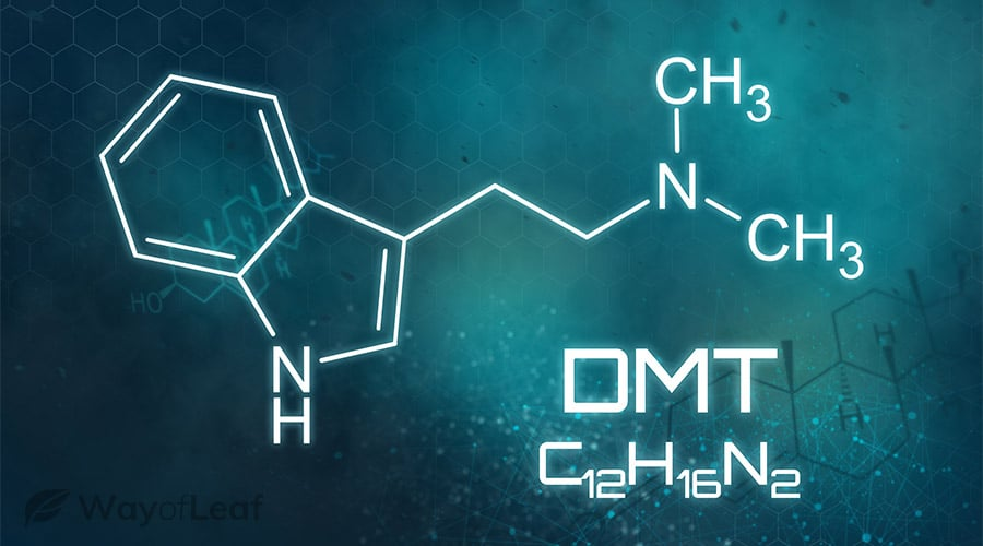 what-are-the-possible-risks-of-5-meo-dmt