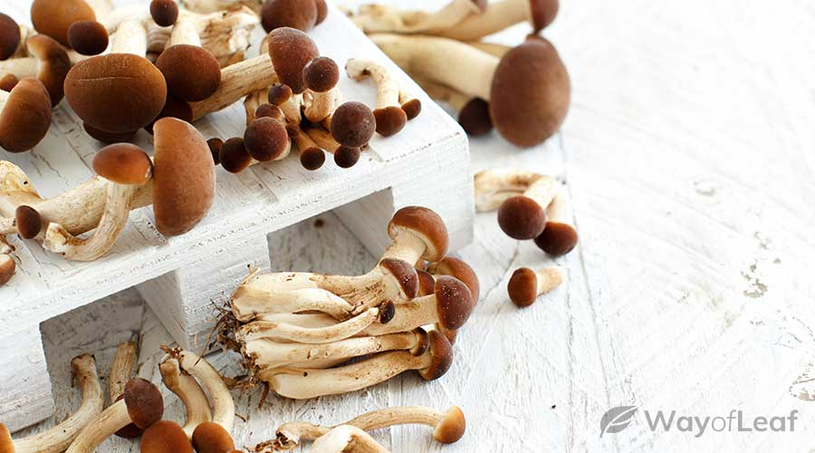 the-most-common-types-of-psychedelic-mushrooms