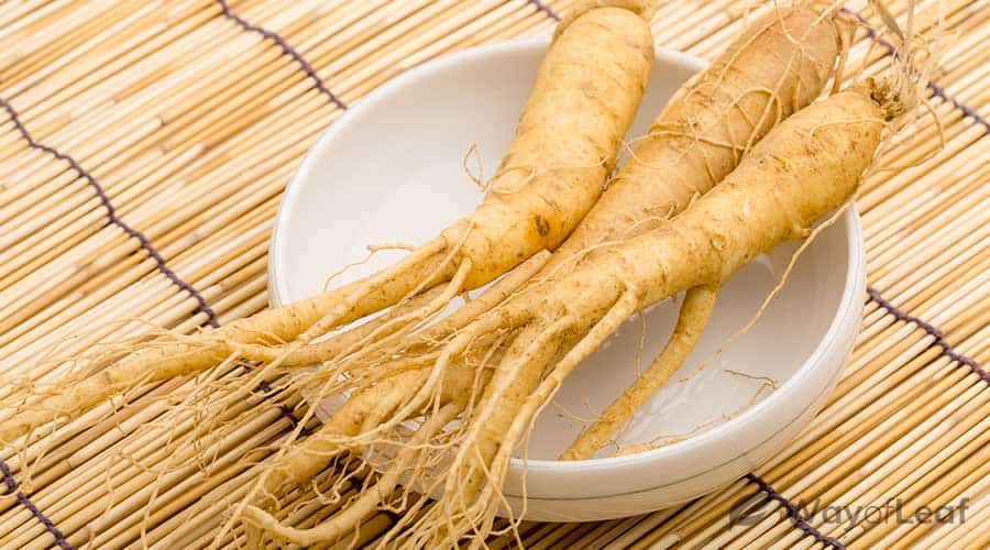 ginseng-benefits-a-brief-overview
